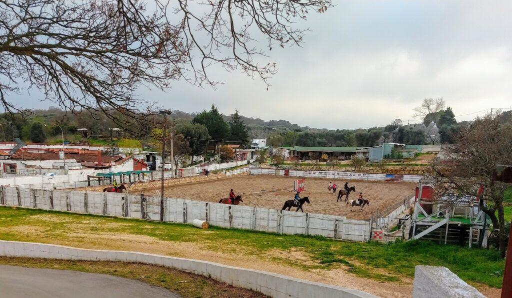 rijbak voor paarden